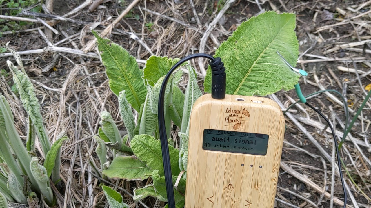 Elecampane Sings With Music Of The Plants Bamboo M Device Youtube