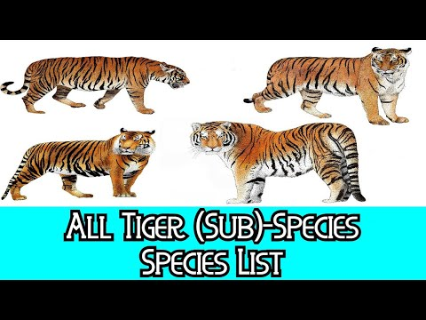 All Tiger (Sub)Species - Species List