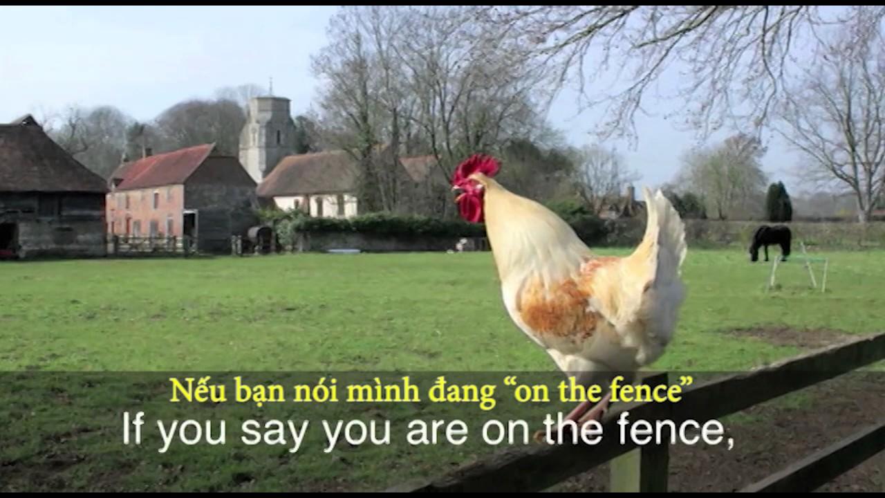 Thành ngữ tiếng Anh thông dụng: On the fence (VOA)