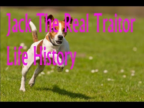 Do You Know About Amazing Jack Russell Terrier Dog?