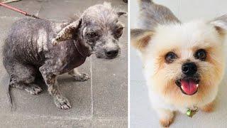 5 Чудесных Преображений Животных