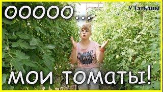 Настойка БОМБА - РАКЕТА для растений: томатов, перцев, баклажанов и огурцов. Мои ТОМАТЫ в теплице!