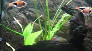 Akwarium 25L. Niebieski Indianin