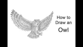 How to Draw an Owl (Great Horned) Flying