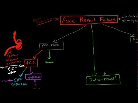 Pathophysiology of Acute Renal Failure