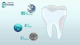 What Is Tooth Enamel? | Pronamel® Toothpaste