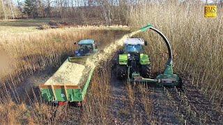 Energieholz- / Kurzumtriebsplantage - Holzernte - häckseln mit Claas Ares und John Deere 2650
