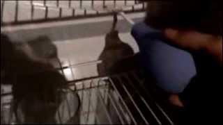 Чистка сливного отверстия в холодильниках(, 2014-02-22T09:24:37.000Z)