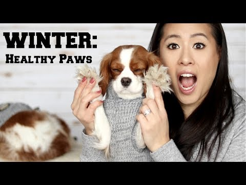HOW TO: HEALTHY PAWS IN WINTER | Dog Boots | Tips & Tricks