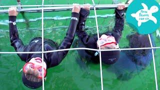 Mit Haifischen im Wasser | Mein Bruder und ich in Südafrika | SWR Kindernetz