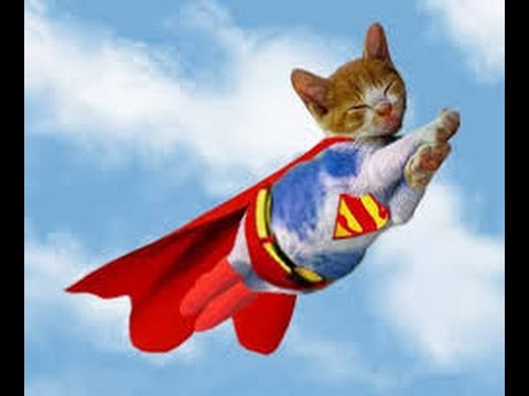 super hero cats saving the day youtube. Black Bedroom Furniture Sets. Home Design Ideas