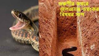 জলজ্যান্ত ভয়ংকর বিষধর সাপ তরুণীর কবরে  bangla news