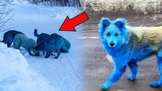Водитель ехал на работу и не поверил своим глазам, когда увидел этих собак!