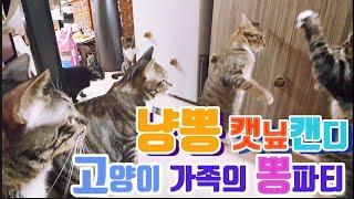 #고양이#캣닢 냥뽕2. 캣닢캔디와 고양이를 관찰해보았어…