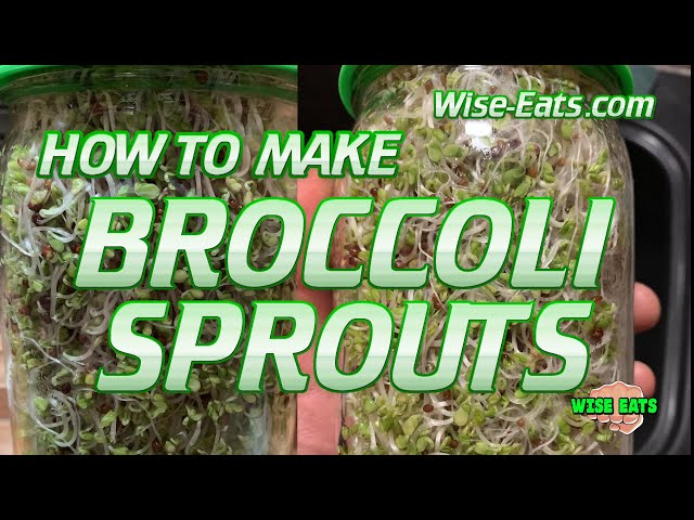 How to Make Broccoli Sprouts in One Minute! - Powerful SUPER FOOD - Homegrown Vegetables!