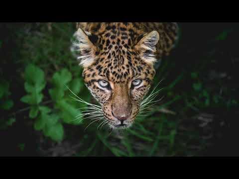Wilson Kentura - Dark Diving (Aquatic Mix)