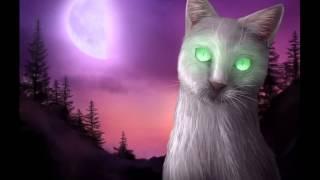 """""""Коты-Воители"""" Воробей и Половинка Луны."""
