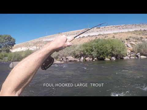 Truckee River Fly Fishing 9/8/19