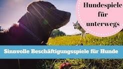 Hundespiele ► Kostenlose Spiele für deinen Hund - Sinvoll und spaßig für Hunde