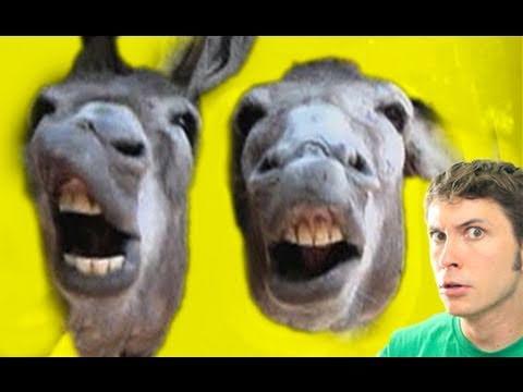 Image result for stupid donkey