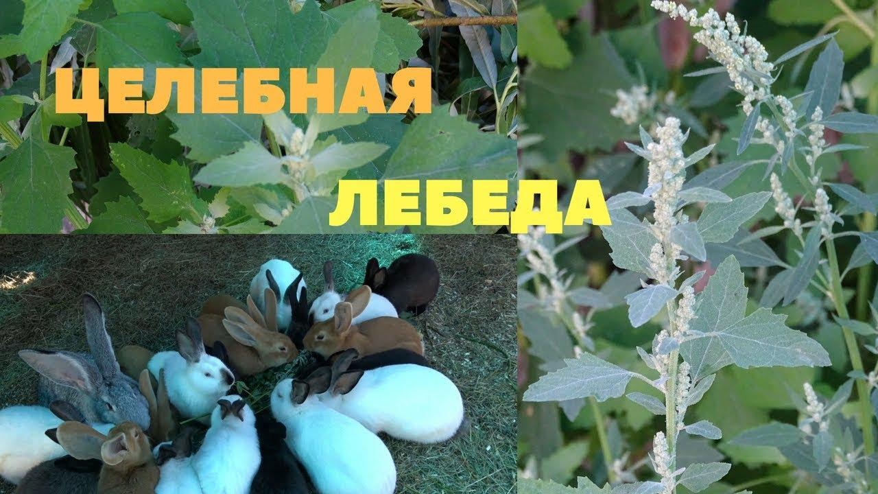Птицы кировской области фото и название свое