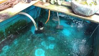 日式魚池過濾參考 兩個普利桶一個玻璃缸