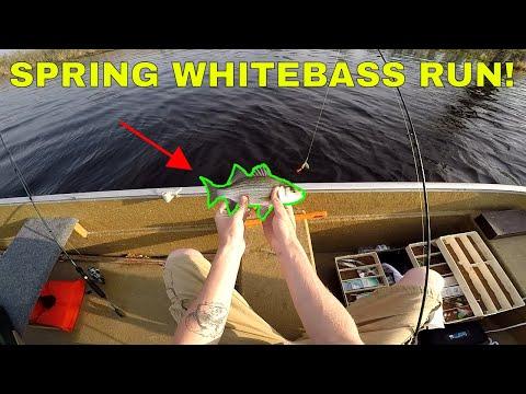 WHITE BASS FISHING! - Fremont, WI