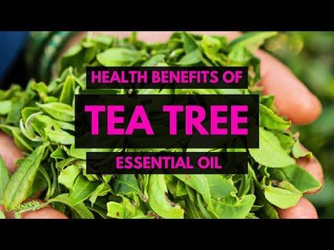 top-10-uses-of-tea-tree-(melaleuca)-oil---essential-oils---melaleuca-tea-tree-oil-benefits