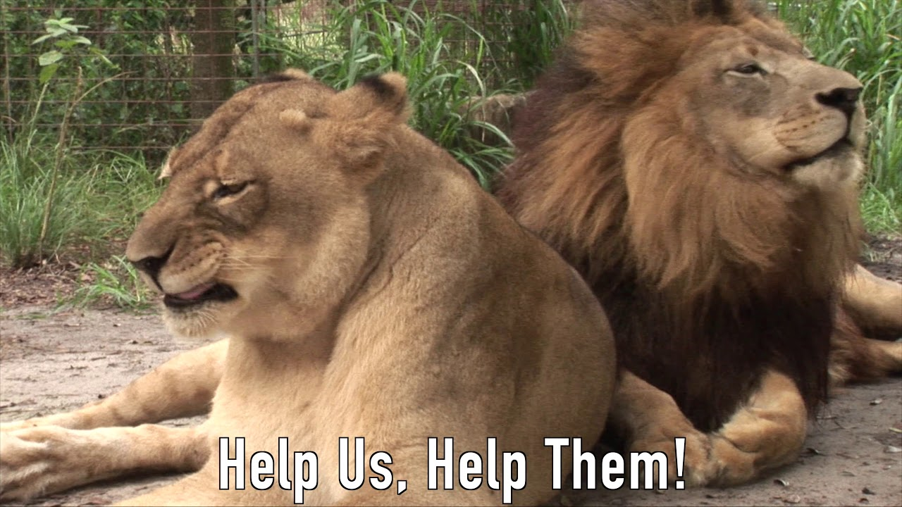 Big Cat RESCUE?