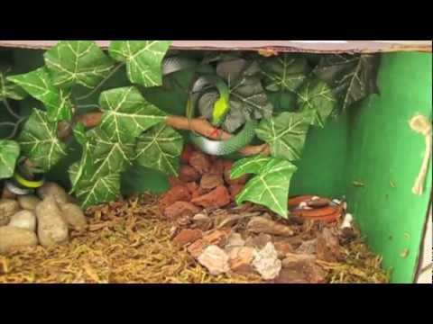 2nd Grade Science Project On Snakes Diorama And Poster Youtube