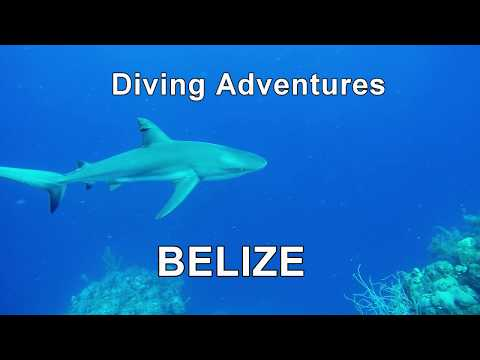 Diving Adventures in Belize: Blue Hole and Red-footed Booby