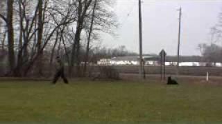 German Shepherd Zeus - Boot Camp Training Graduate