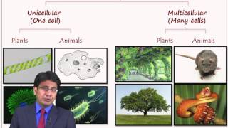 Biological Diversity Lesson – Biology Lecture - Std 8 INK Online Tuitions / Classes