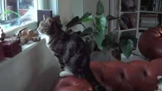 Cat And Cairn Terrier Birdwatching