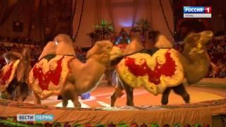 «Боно Бо» приглашает пермяков на заключительное шоу