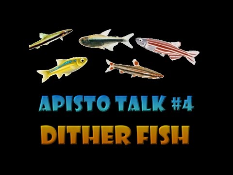 Apisto Talk #4 - Dither Fish