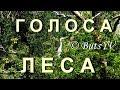 Голоса леса летнего и осеннего целебное видео Voices Of Forest Relax Video mp3