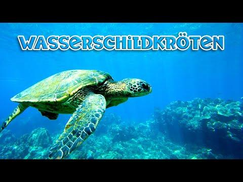 Wasserschildkröten Schulfilm, Lehrfilm für Kinder, deutsch, HD, kostenlos, Dokumentation