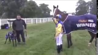 Кто быстрей конь или собака? Лошадь vs собака