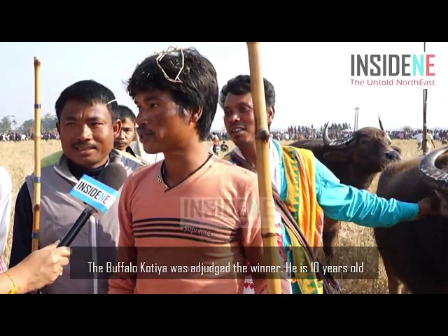 Magh Bihu and traditional buffalo fight at Ahatguri