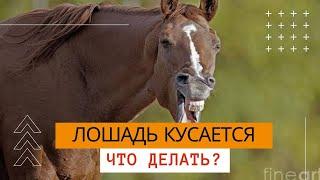 Лошадь кусается - видео обучалка(Как сделать так, чтобы лошадь перестала кусаться. Дмитрий Анисимов. Автор фильмов