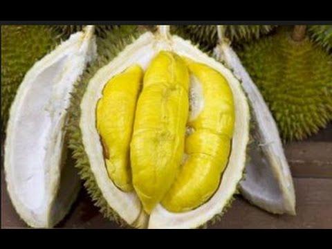 DUREN PALING ENAK DI SERANG | makan durian part 1
