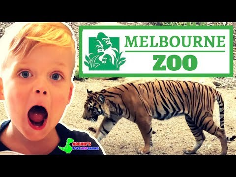 Melbourne Zoo 2018   Australia
