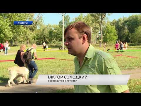"""Телеканал TV5: """"Собачий вальс"""" у Пологах"""