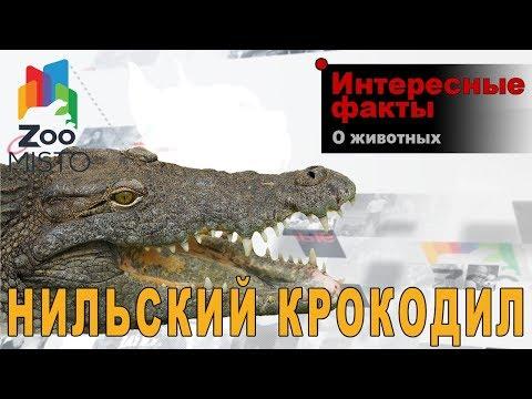 Вопрос: Где на земле одновременно обитают аллигаторы и крокодилы?