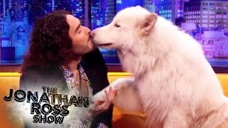 Video Russell Brand and Brian The Dog - The Jonathan Ross Show download MP3, 3GP, MP4, WEBM, AVI, FLV Juni 2017