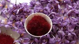 Saffron production in Kosovo (with subtitles)