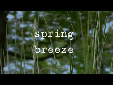 Spring Breeze Jazzy  lofi  Chill  Instrumental