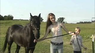 The Goddess Connection - Horse Training