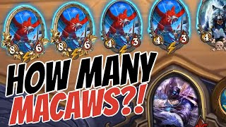 HOW MANY MACCAWS?! AL'AKIR OP w/ BEASTS -Hearthstone Battlegrounds